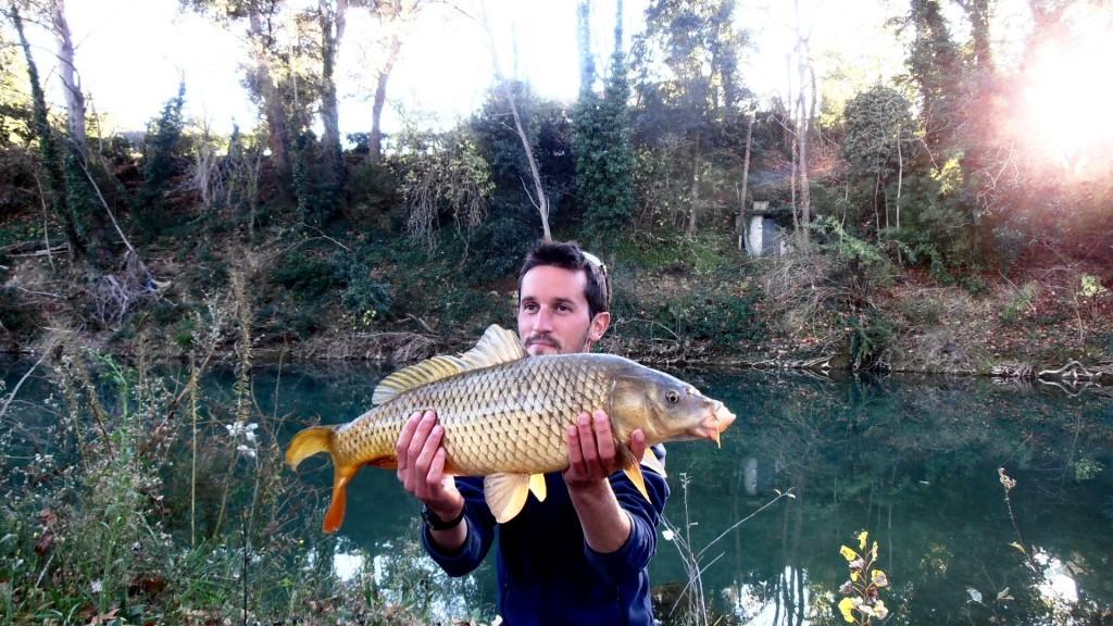 pêche carpe hérault
