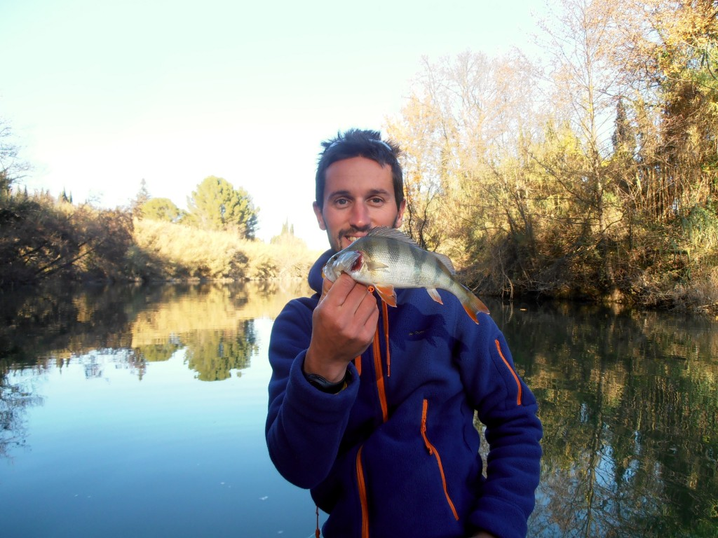 pêche leurre perche herault