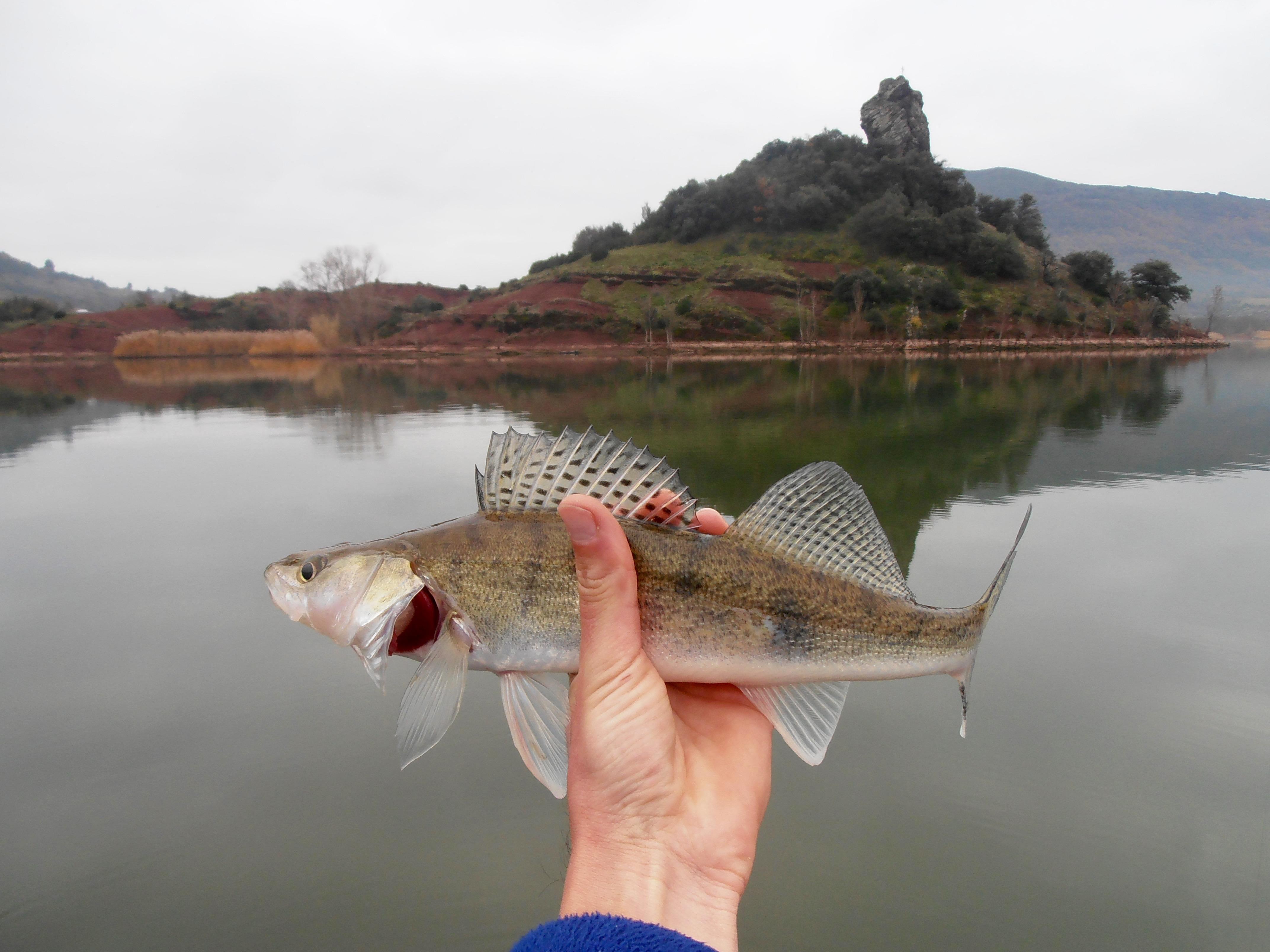 guide pêche carnassier montpellier