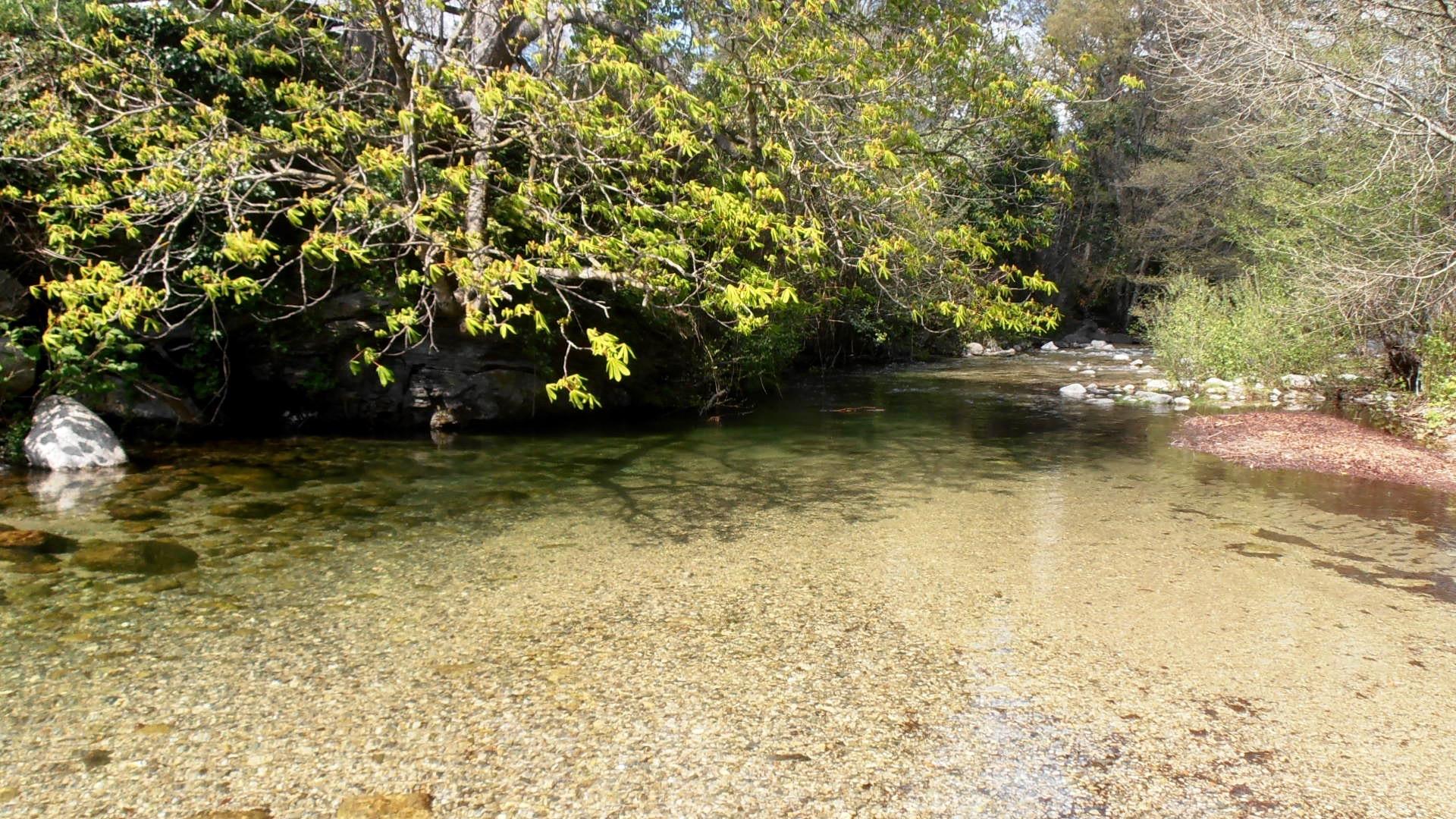rivière truite Hérault